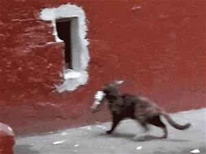 Gifs Of Animals Being Stupid (25 pics)