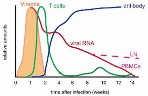 Schematic Diagram Of Viral And Immunologic Features Of