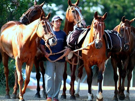 polo argentine ponies horse argentina pony england horses halter wonderful thoroughbred breeds kait bring would paintings breed uploaded user