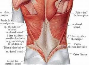 Douleur Milieu Dos Cancer : muscles lombaires musculation et exercices d 39 tirement ~ Medecine-chirurgie-esthetiques.com Avis de Voitures