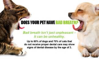 bad breath in cats 20 special on pet dental cleanings animal