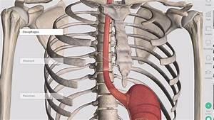 Anatomical Regions Of The Abdomen