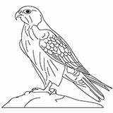 Falcon Coloring Pages Gyrfalcon Drawing Peregrine Line Millennium Printable Designlooter Painting Drawings Getdrawings 17kb 230px sketch template