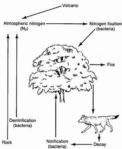 Blank Nitrogen Cycle Diagram