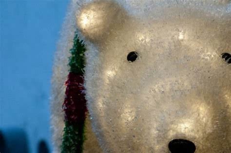 lighted polar bear free stock photo public domain pictures