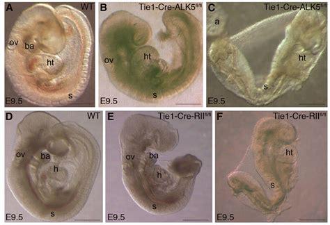 compensatory signalling induced   yolk sac