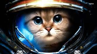 cat astronaut cat astronaut wallpaper page 2 pics about space