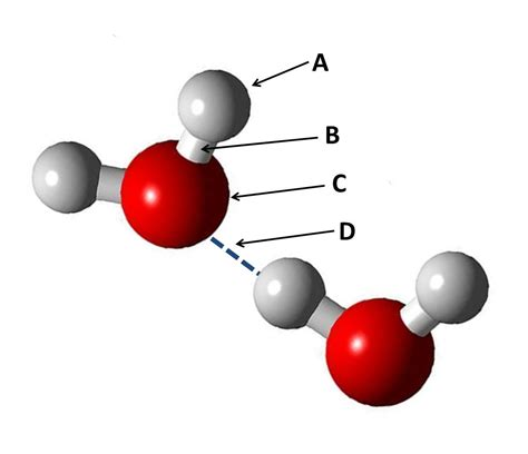Biochemistry Quiz Questions And Answers