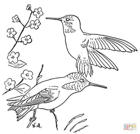 rufous hummingbird coloring page  printable coloring