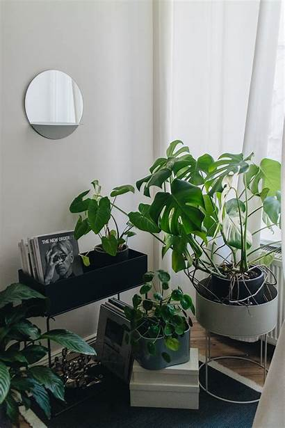 Living Plant Ferm Inspiration Alice Flinders Iheartalice