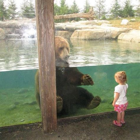 Log in — Instagram   Zoo animals, Columbus zoo, Animal photo