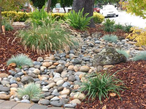 low water landscaping low water gardens traditional landscape san francisco by jpm landscape