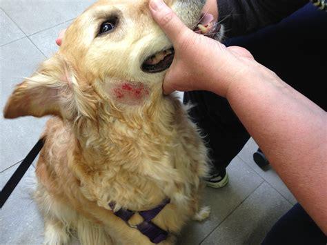 dog summer skin problems hot spots