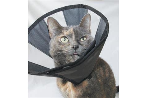 Soft E Collar Cats