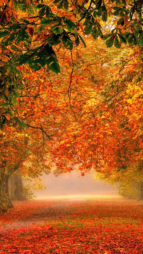 forest nature park colorful leaves iphone wallpaper