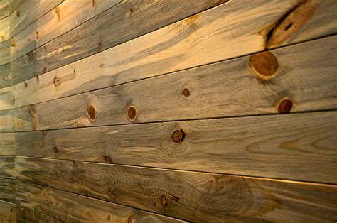 beetle kill pine lumber colorado pine beetle coniferous forest