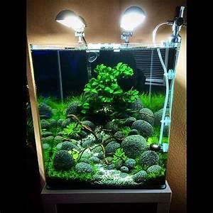 Aquarium Einrichten 60l : die besten 25 garnelen im aquarium ideen auf pinterest ~ Michelbontemps.com Haus und Dekorationen