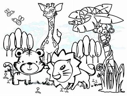 Animal Coloring Pages Colouring Animals Forest Rainforest