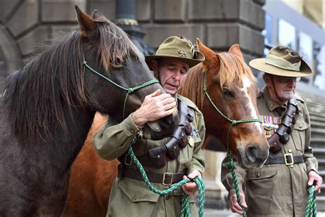horses wild australia native culture independent animals brumby war