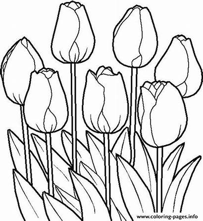 Coloring Pages Flowers Tulips Printable