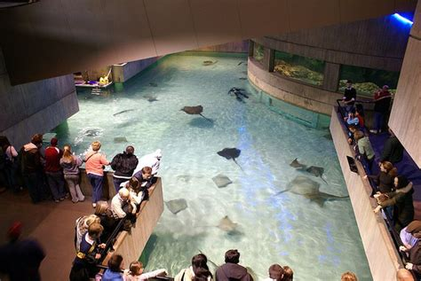 10 largest best aquariums in the world conservation institute