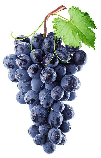 Grape Pictures Images And Stock Photos Istock