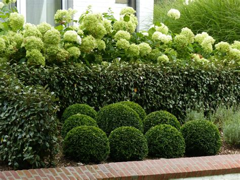 taille hortensia en pot le jardin fa 231 ade balcon terrasse entr 233 e el lef 233 bien