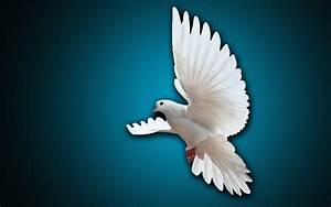 White Pigeon Flying Wallpaper Hd | www.imgkid.com - The ...