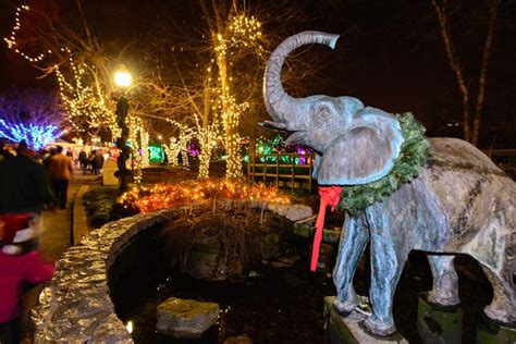 saint louis zoo christmas lights holiday lights in st louis explore st louis