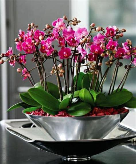 comment garder une orchidee dudew