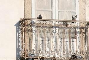 Fliegen Fernhalten Balkon : tauben abwehren tierfreundlich vom balkon fernhalten ~ Whattoseeinmadrid.com Haus und Dekorationen
