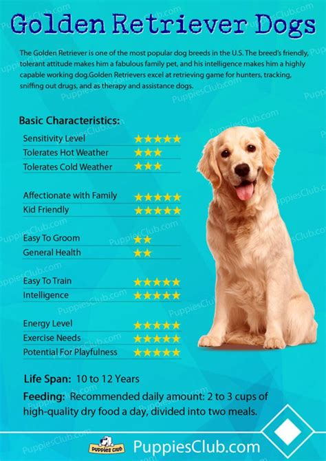 golden retriever dogs breed information personality pictures