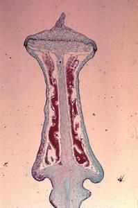 Bryophytes  Large Images