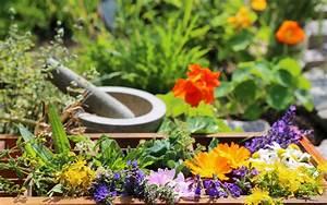 Schnittgut Alles Aus Dem Garten : heilpflanzen aus dem garten valeo ~ Buech-reservation.com Haus und Dekorationen