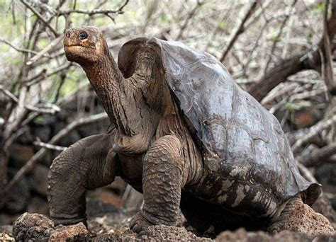 cool animals pictures animals galapagos island natural