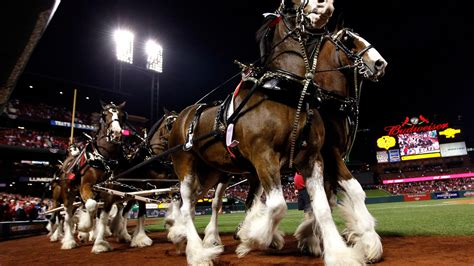 2013 Super Bowl Commercials Budweiser Clydesdale Ad Isnt