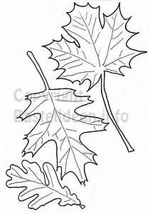 Blätter Vorlagen Zum Ausschneiden : kostenlose bastelvorlagen herbst herbstbl tter 1 ~ Lizthompson.info Haus und Dekorationen