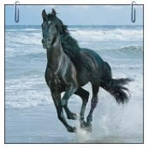 Pin Omalovánky Koně on Pinterest