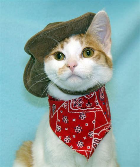 Cat Cowboy Kitty Portrait Cc 5 6 7 8 Dancing My Way