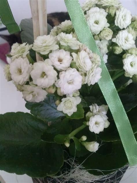 Wie Heißt Meine Zimmerpflanze by Wie Hei 223 T Diese Zimmerpflanze Kalanchoe Blossfeldiana