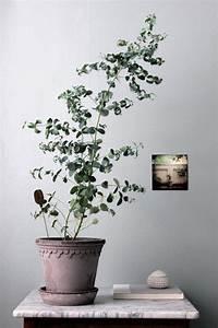 Eucalyptus Plante D Intérieur : une ancienne menuiserie revisit e un coin de verdure chez soi green home pinterest ~ Melissatoandfro.com Idées de Décoration
