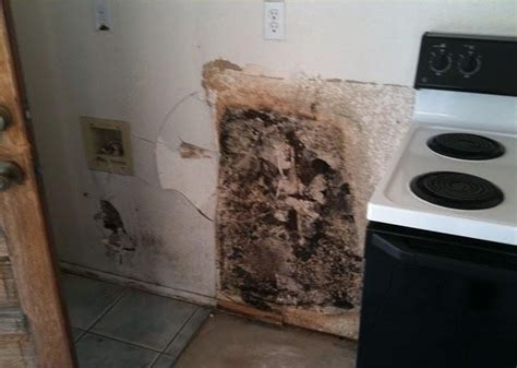 black mold in kitchen cabinets mold in kitchen cabinets savae org 7893