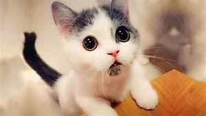 ♥Cute Cats an... Cute Cats