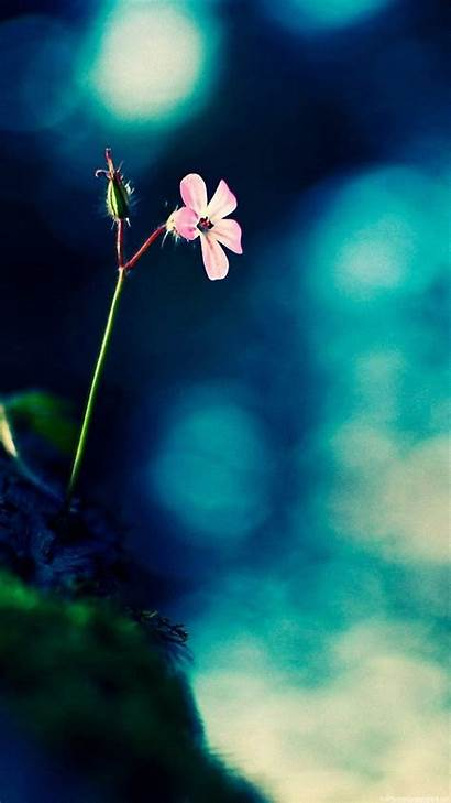 Wallpapers Vertical Android Screen Mobile Flower Portrait