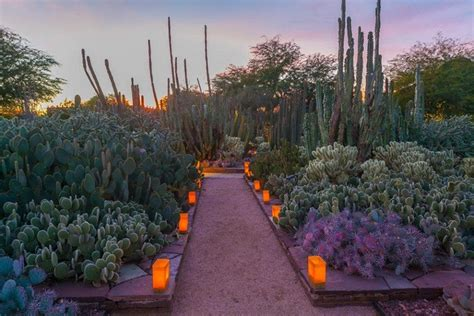 Desert Botanical Garden - scottsdale things to do 10best attractions reviews