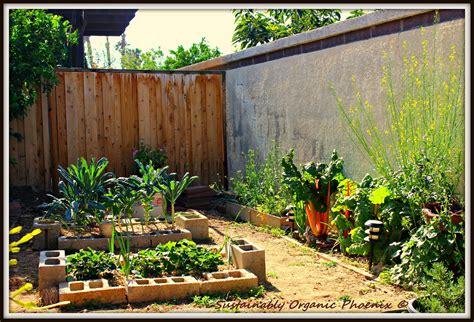mini backyard garden sustainably organic phoenix