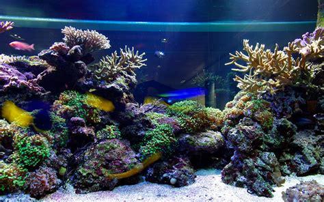 aquarium fond d 233 cran anim 233 applications android sur