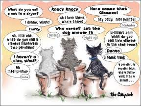 cat jokes for its all about me cat jokes