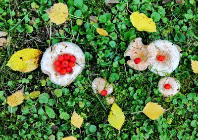 Ganz Viele Pilze Im Garten by Mano S Welt Freitagsallerlei 35 2016