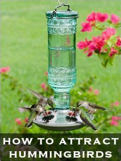 how to keep ants hummingbird feeder here are tips for keeping ants wasps bees out of